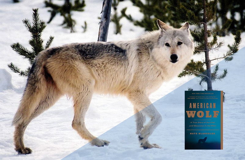 American Wolf, The True Story of Survival & Obsession in the West